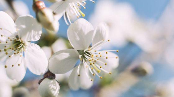 Productos Saludables y Ecológicos. Beneficios y Compromisos